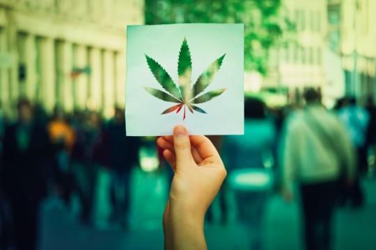 Senate Majority Leader Introduces Bill for Nationwide Cannabis Legalization