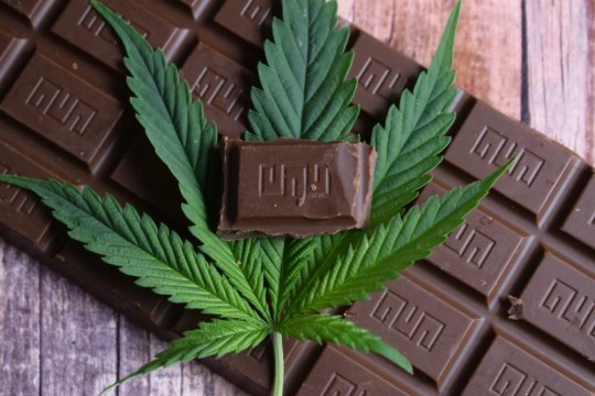 Everything You Should Know About CBD Chocolates