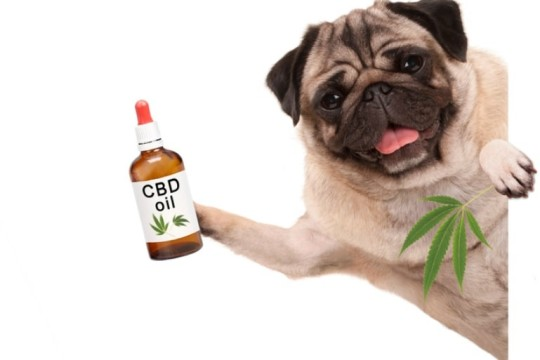 CBD Dog Treats to Help Your Dog Relax