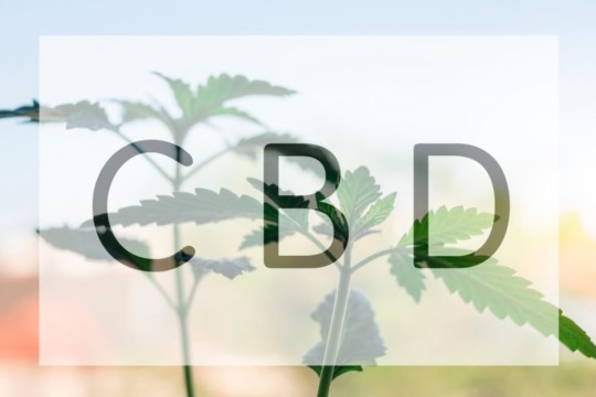 CBD Oil Could Be Useful For Children With Autism