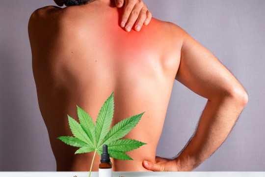 Shopping For The Best CBD Oils For Pain Relief