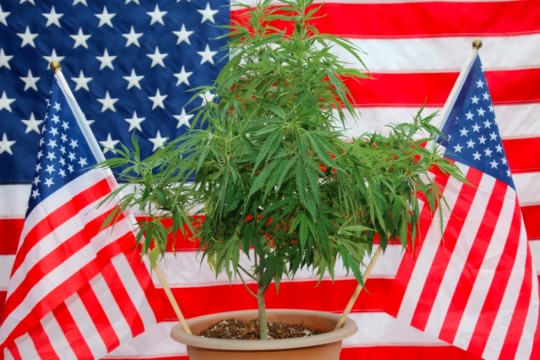 A Bill That Could Federally Legalize Marijuana Reintroduced in the House