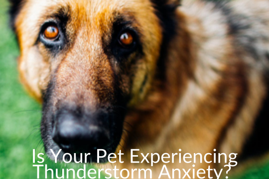 Is Your Pet Experiencing Thunderstorm Anxiety? Try Cbd