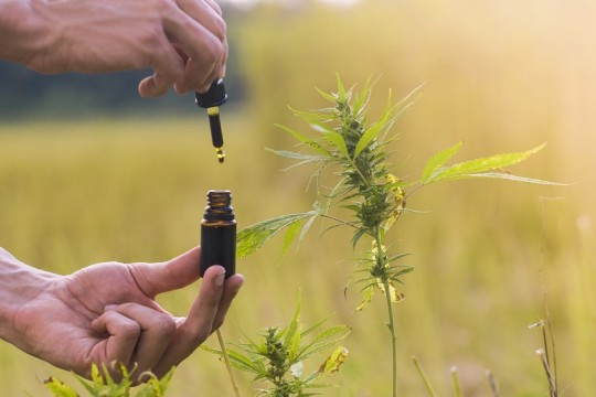 CBD Oil - A Perfect Remedy for Chronic Pain?